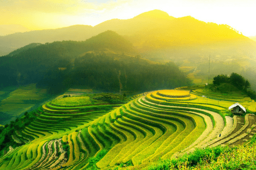 Rice fields, Lombok Island, Bali & Indonesia Cruise