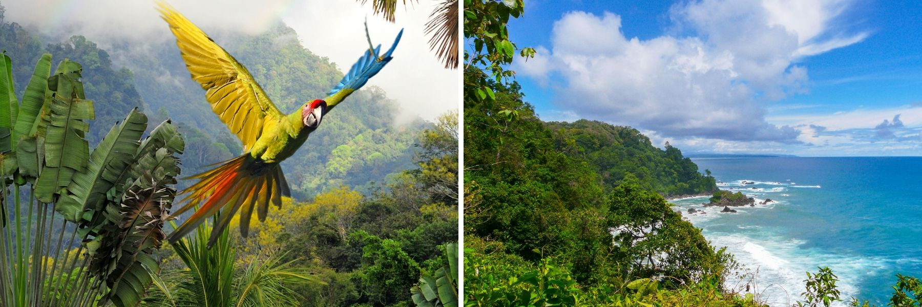 Corcovado National Park, Costa Rica, Unforgettable Cruises