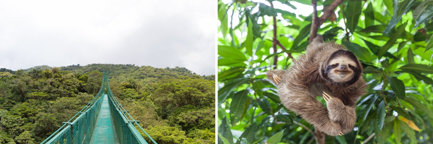 Monteverde Cloud Forest Reserve, Costa Rica, Unforgettable Cruises